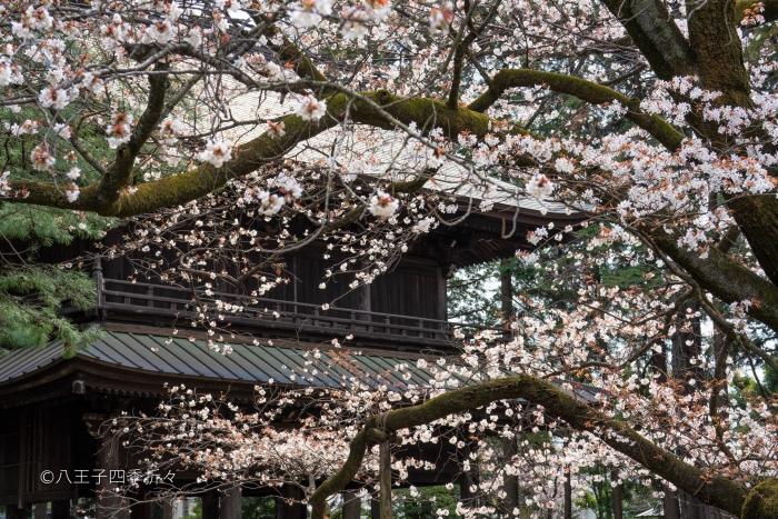 広園寺DSC02449