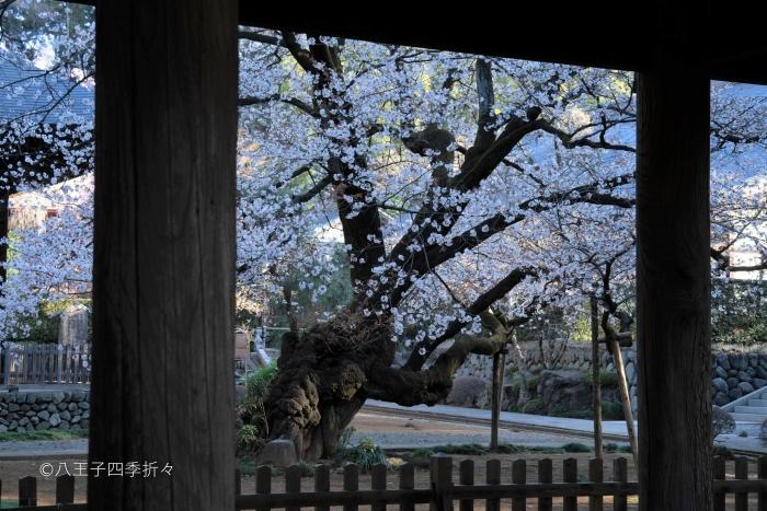広園寺DSC02636