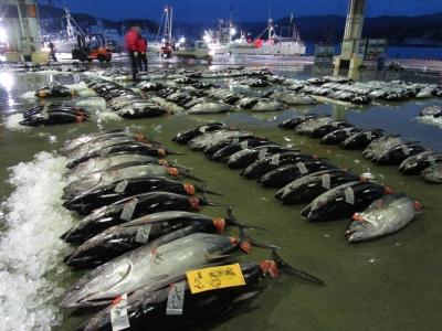 気仙沼魚市場の画像
