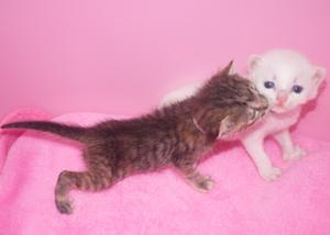 6月9日引取幼猫
