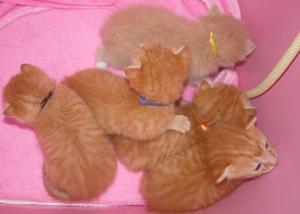6月23日引取幼猫
