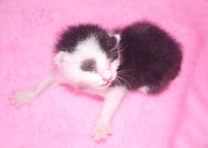 7月2日引取幼猫