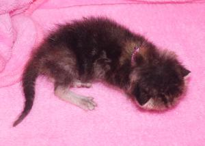 9月23日引取幼猫
