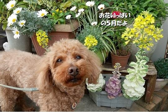 花いっぱいの5月