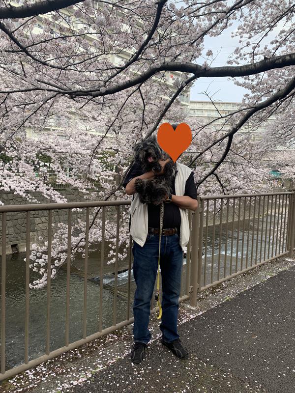 04恩田川桜