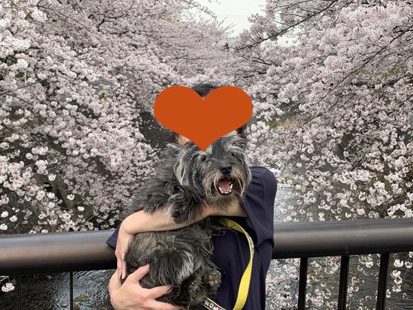 11恩田川桜