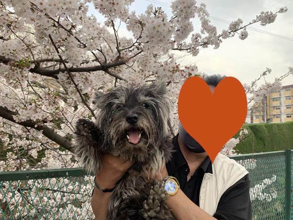 14恩田川桜