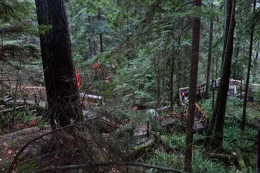 見ての通りしっかりと森林です。