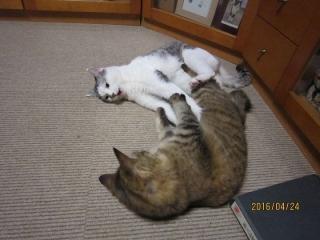 blog200412_1.jpg