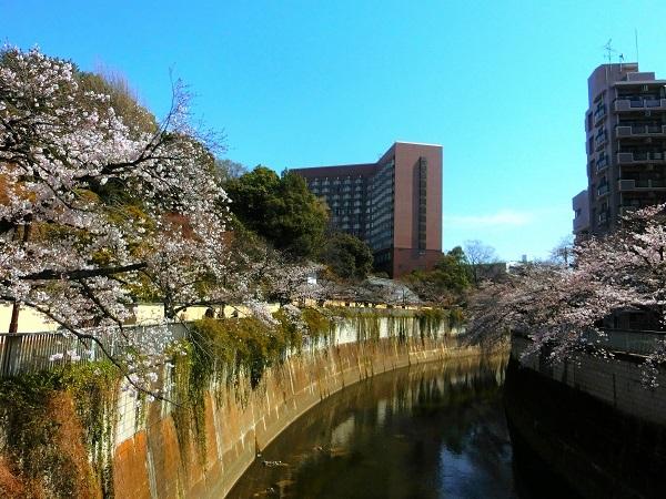 神田川と椿山荘ホテル