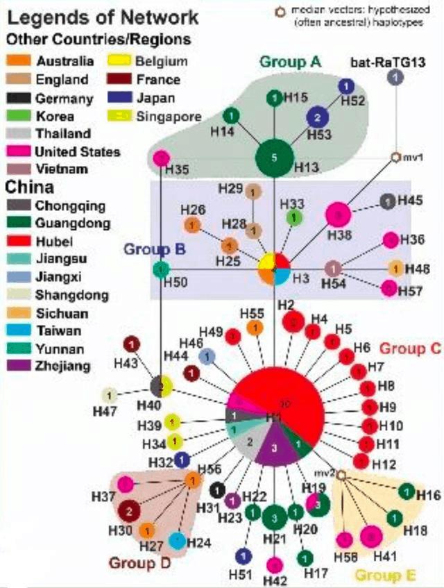 新型コロナウィルス派生系統図