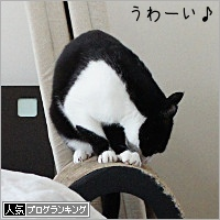 dai20200326_banner.jpg