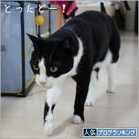 dai20200327_banner.jpg