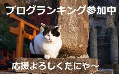 ランキング猫