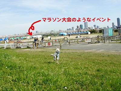 DSC04815.jpg