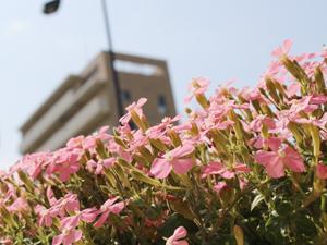 カコのエントランスは春のお花でいっぱいです