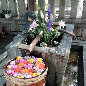 6月20日野見神社blog01