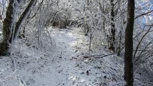 201129山~東山s (4)