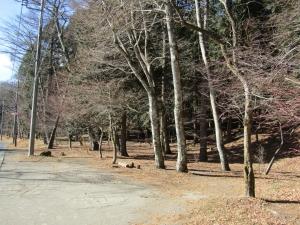 201218山 (1)s