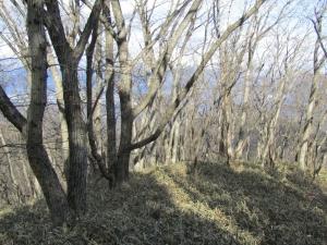 201218山 (4)s