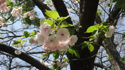 s春の花3