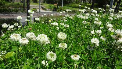 s春の花4