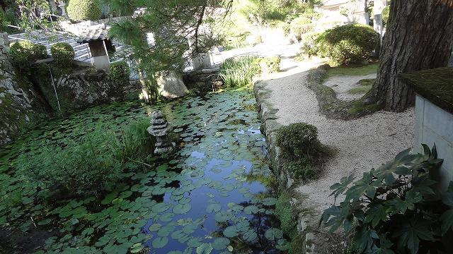瑠璃光寺の蓮池