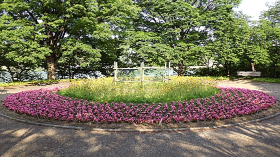 2017年5月に長居公園植物園にて撮影