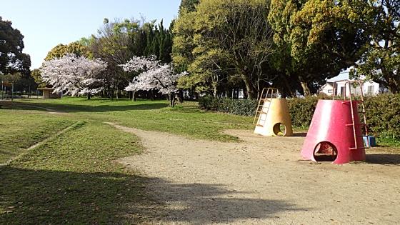 大泉緑地の桜 2021(わんぱくランドの遊具と桜)