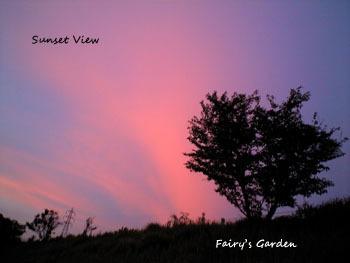 Fairy's Garden-夕焼け