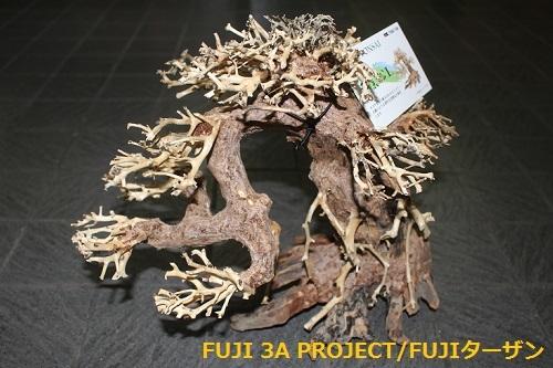 カミハタ五葉松L