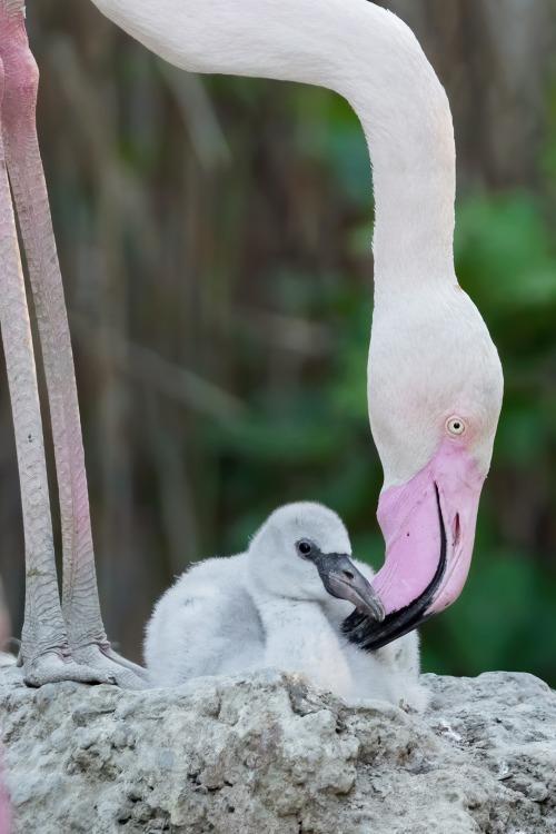gekkan-wienPA_Flamingo1.jpg