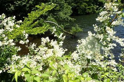 ウツギと芦ノ湖20200624_002