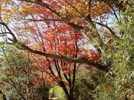 01_カエデの紅葉