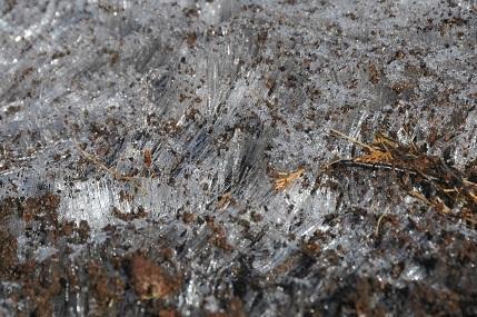 201226 黒岳霜柱