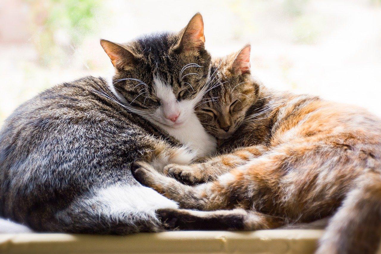 cats-6203465_1280.jpg