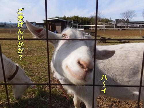 s-DSCF9319.jpg