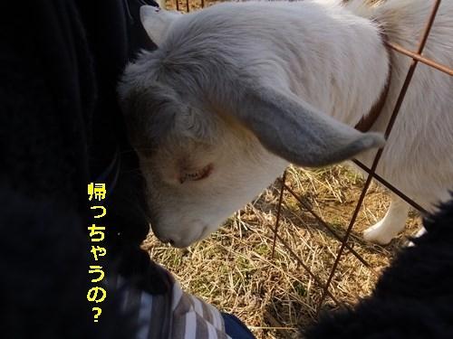 s-DSCF9342.jpg