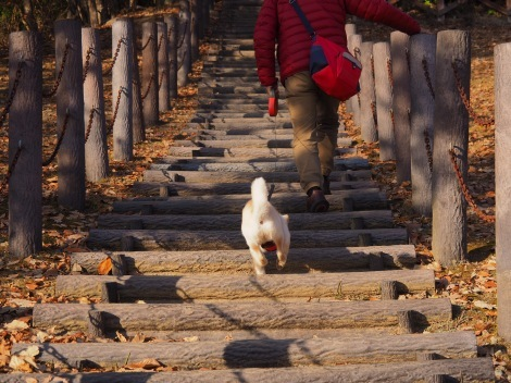 階段登れるよ