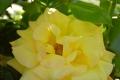 21年春 ピース早咲き