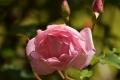 21春 桜鏡