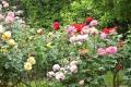 21春 離れのバラ花壇