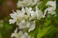 21真っ白な花