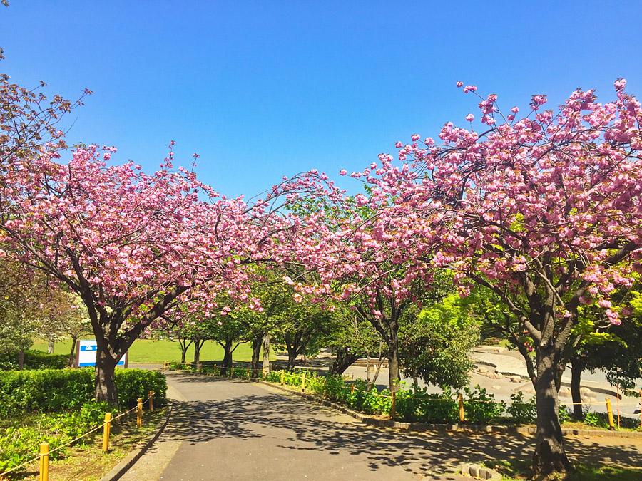 210409,春の花たち1