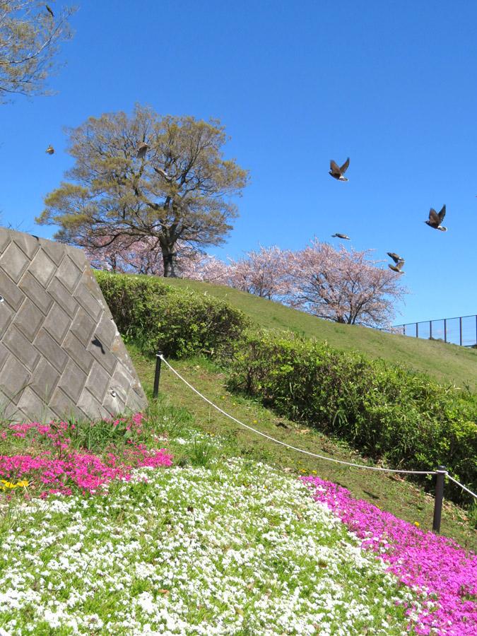 210409,春の花たち2