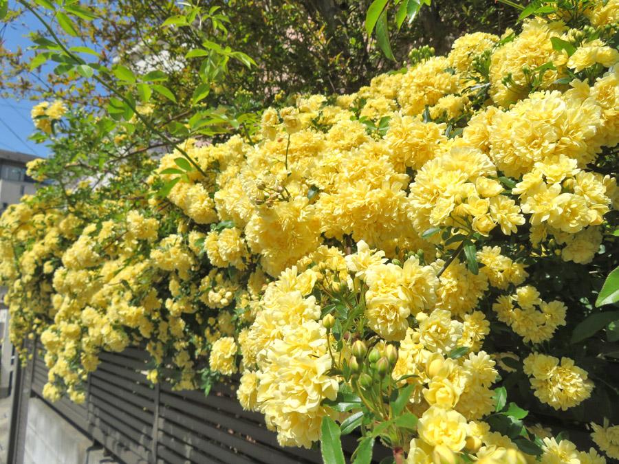 210409,春の花たち3