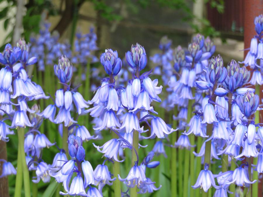 210409,春の花たち4