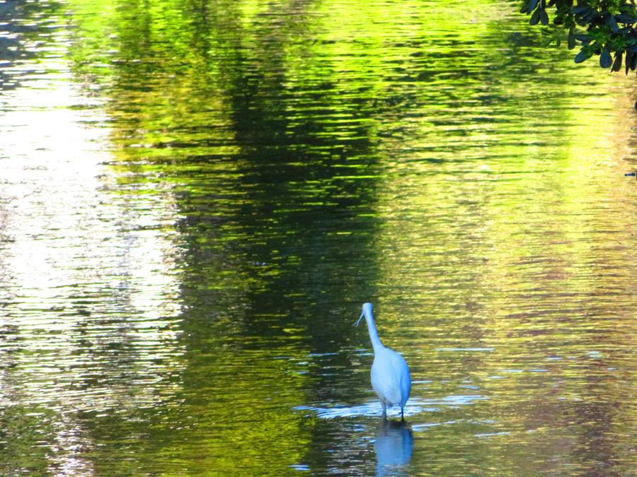 200414,田越川の白鷺3