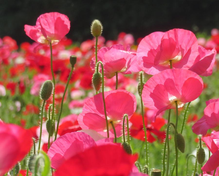 210501,くりはま花の国8