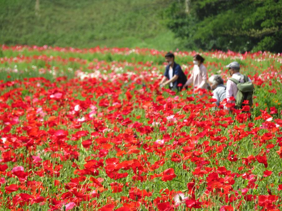 210501,くりはま花の国10